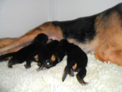 Puppies 6 days 1